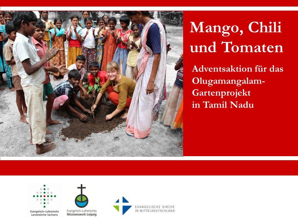 Mango, Chili und Tomaten Adventsaktion für das Olugamangalam- Gartenprojekt in Tamil Nadu