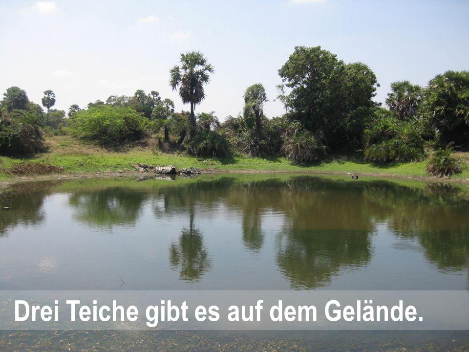 Drei Teiche gibt es auf dem Gelände.
