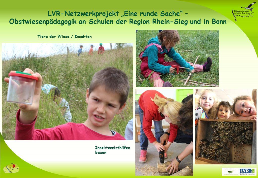 """Insektennisthilfen bauen Tiere der Wiese / Insekten LVR-Netzwerkprojekt """"Eine runde Sache – Obstwiesenpädagogik an Schulen der Region Rhein-Sieg und in Bonn"""
