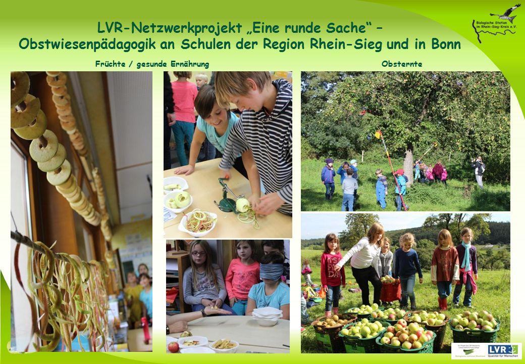 """Obsternte Früchte / gesunde Ernährung LVR-Netzwerkprojekt """"Eine runde Sache – Obstwiesenpädagogik an Schulen der Region Rhein-Sieg und in Bonn"""