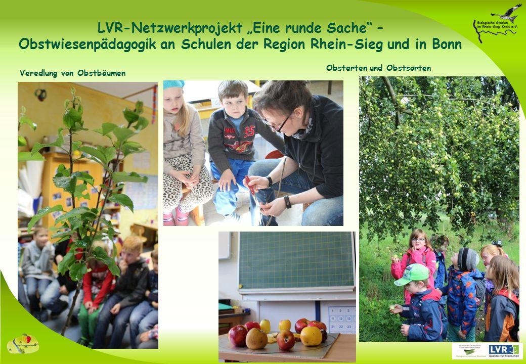 """Obstarten und Obstsorten Veredlung von Obstbäumen LVR-Netzwerkprojekt """"Eine runde Sache – Obstwiesenpädagogik an Schulen der Region Rhein-Sieg und in Bonn"""