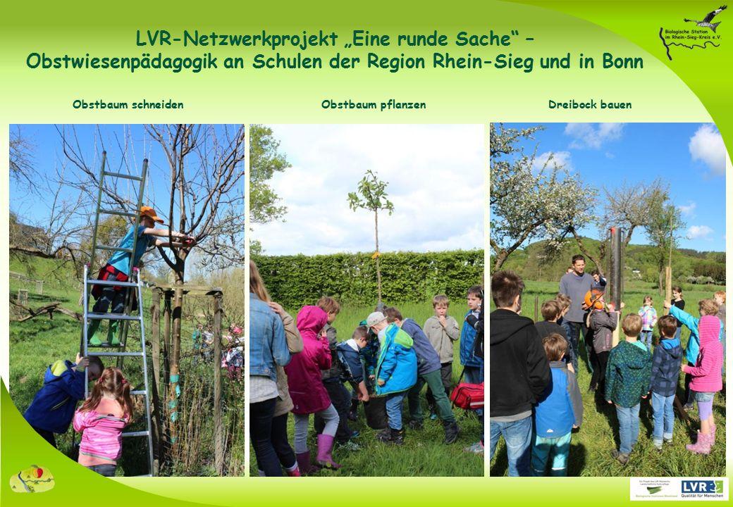 """Obstbaum pflanzen Obstbaum schneiden Dreibock bauen LVR-Netzwerkprojekt """"Eine runde Sache – Obstwiesenpädagogik an Schulen der Region Rhein-Sieg und in Bonn"""