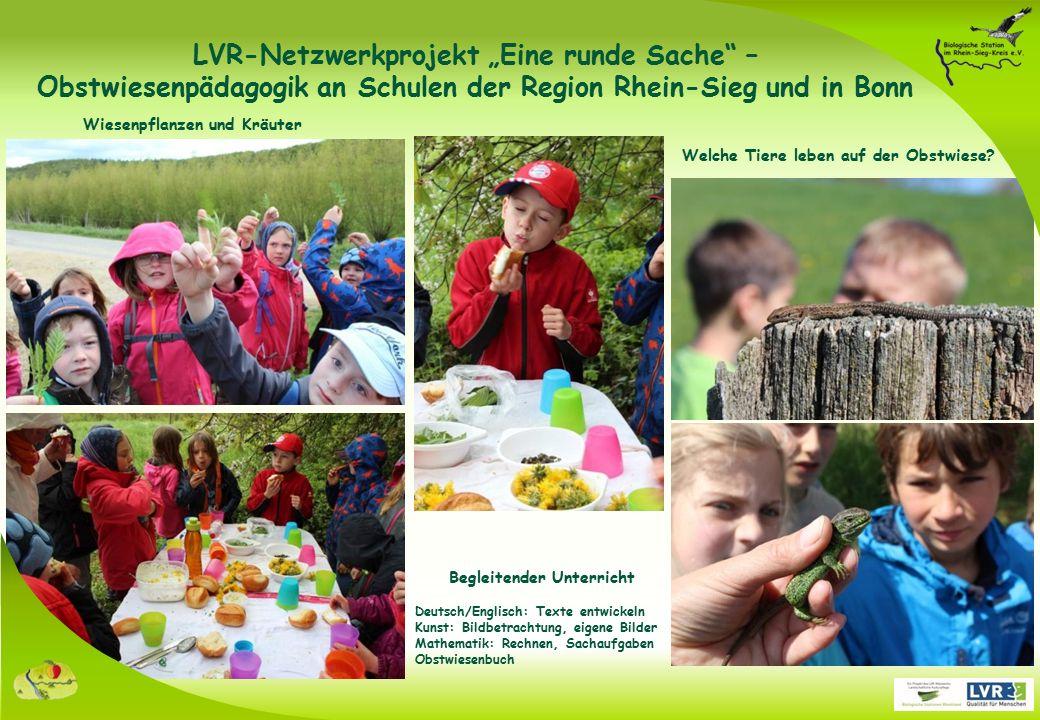 """Bestäubung auf Obstwiesen Imkerbesuch LVR-Netzwerkprojekt """"Eine runde Sache – Obstwiesenpädagogik an Schulen der Region Rhein-Sieg und in Bonn"""