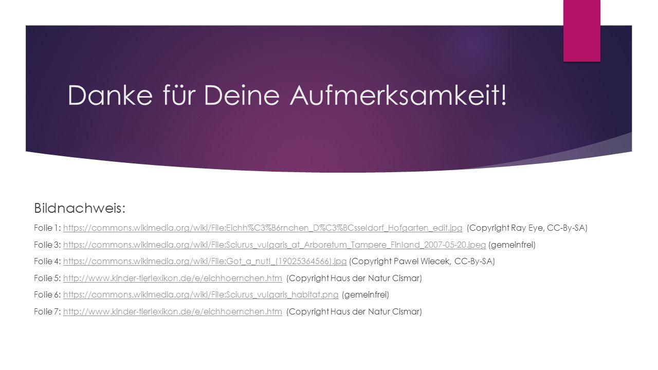 Danke für Deine Aufmerksamkeit! Bildnachweis: Folie 1: https://commons.wikimedia.org/wiki/File:Eichh%C3%B6rnchen_D%C3%BCsseldorf_Hofgarten_edit.jpg (C