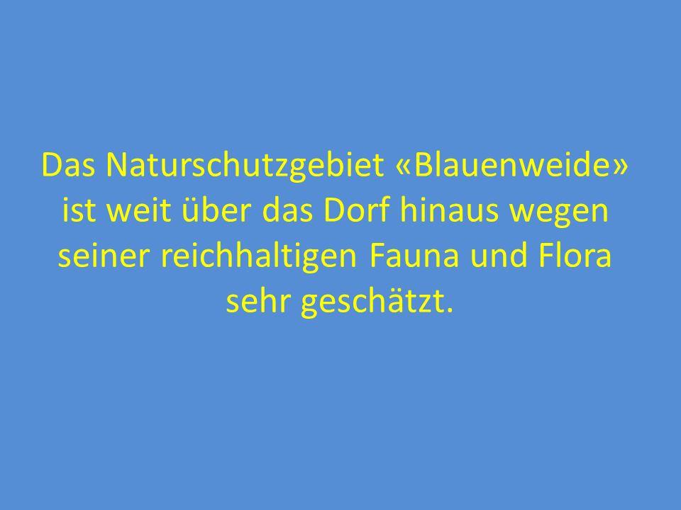 Blauen – zentral gelegen mit hohem Wohn- und Freizeitwert In Blauen Kindergarten, Primarschule, Krabbel- und Spielgruppe, Dorfladen, ÖV-An- schluss; Mitfahrzentrale, kommunale Seniorenwohnungen, aktives Vereins- leben, Kultur-Schüre, Reitsportanlage Arbeit-, Kultur-, Shopping-, Event-, FCB- und Freizeitstadt Basel in nur ca.