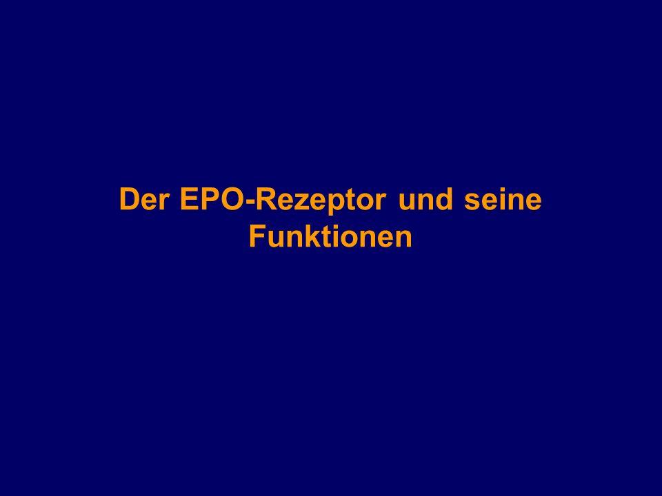 Der EPO-Rezeptor und seine Funktionen