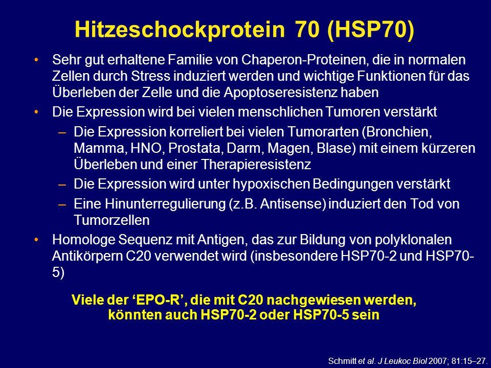Hitzeschockprotein 70 (HSP70) Sehr gut erhaltene Familie von Chaperon-Proteinen, die in normalen Zellen durch Stress induziert werden und wichtige Fun