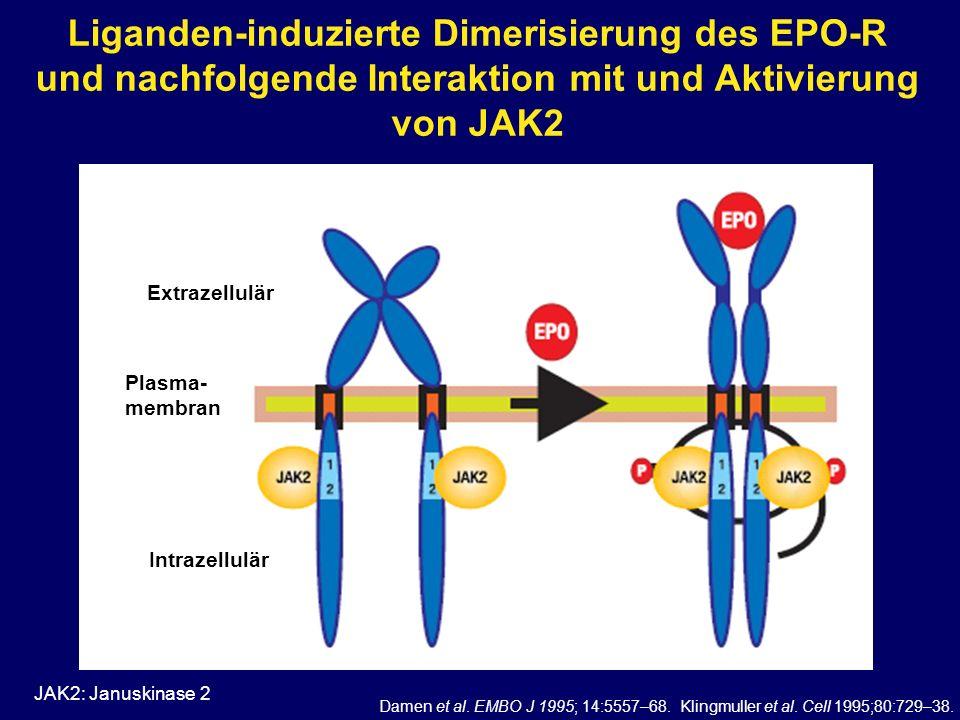 Liganden-induzierte Dimerisierung des EPO-R und nachfolgende Interaktion mit und Aktivierung von JAK2 JAK2: Januskinase 2 Damen et al. EMBO J 1995; 14
