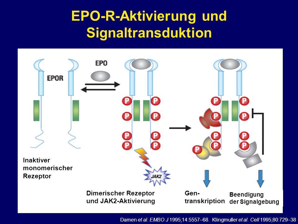 EPO-R-Aktivierung und Signaltransduktion Damen et al. EMBO J 1995;14:5557–68. Klingmuller et al. Cell 1995;80:729–38 Inaktiver monomerischer Rezeptor