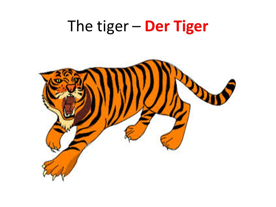 The tiger – Der Tiger