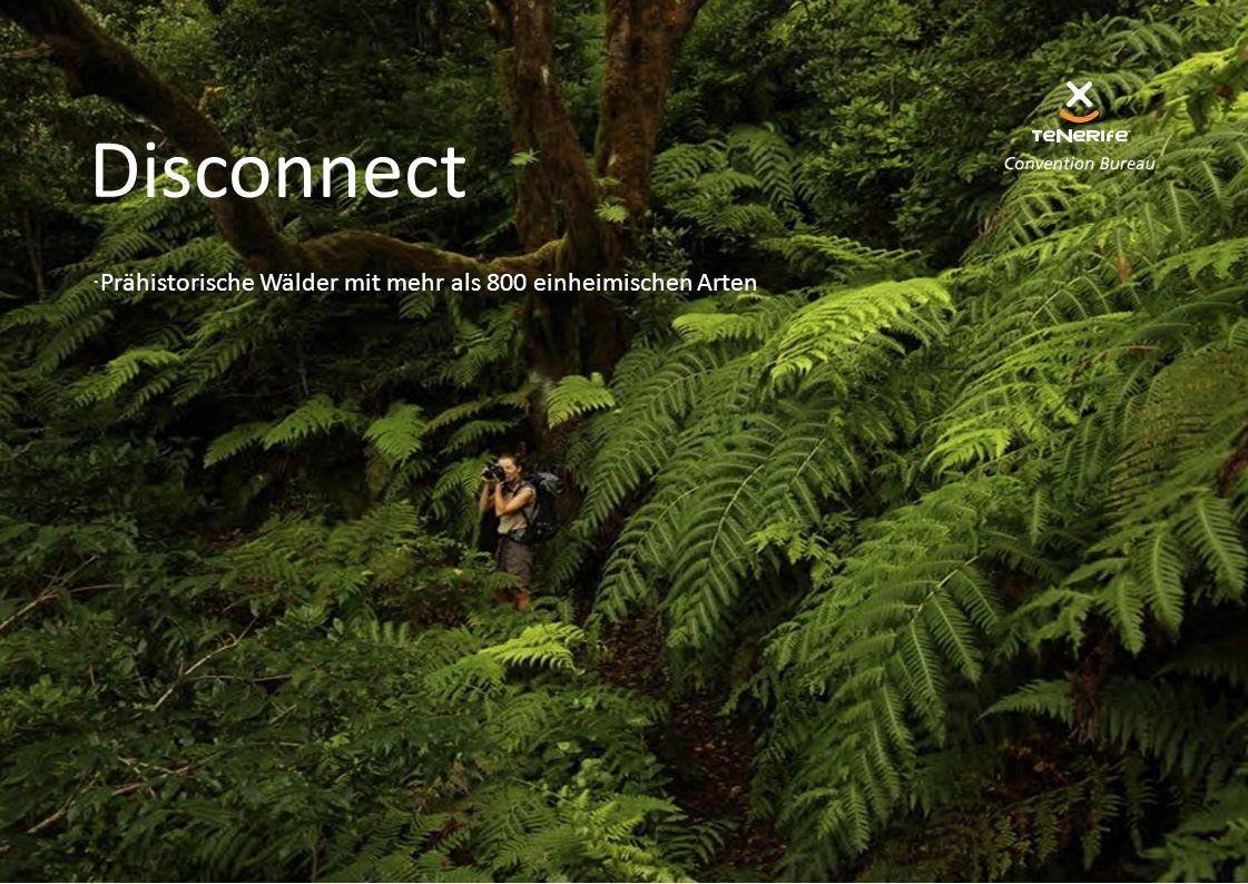 Disconnect ·Prähistorische Wälder mit mehr als 800 einheimischen Arten