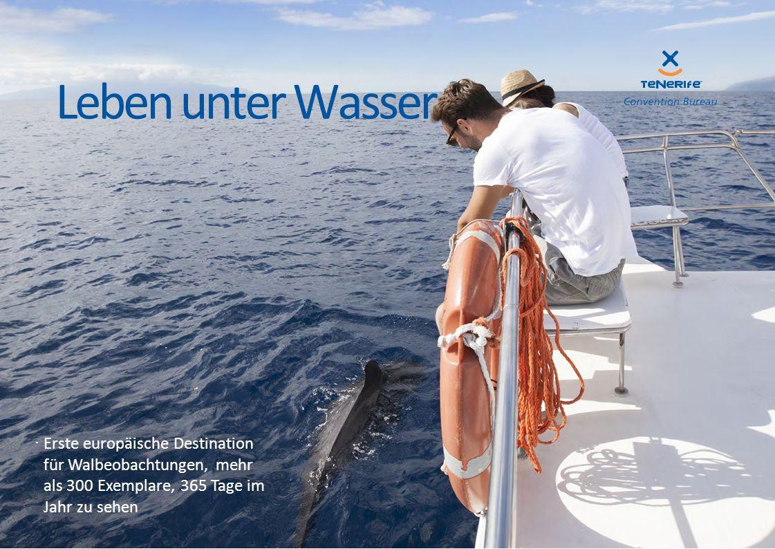 ·Erste europäische Destination für Walbeobachtungen, mehr als 300 Exemplare, 365 Tage im Jahr zu sehen Leben unter Wasser