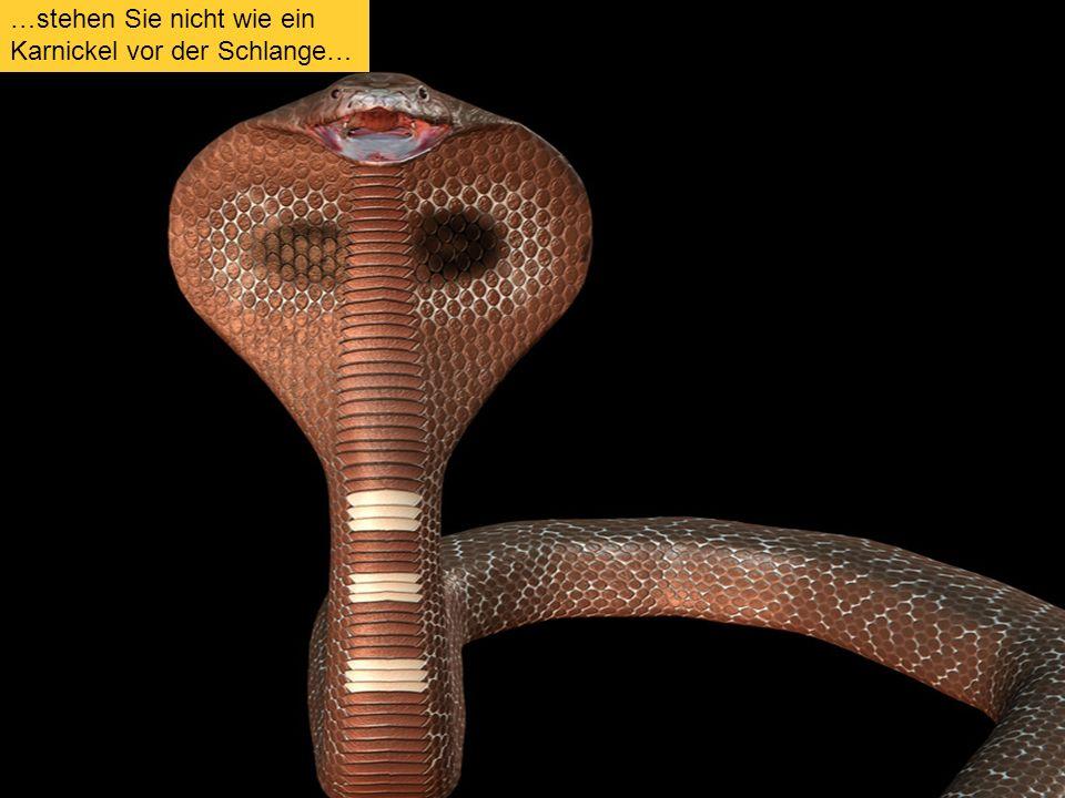 5 …stehen Sie nicht wie ein Karnickel vor der Schlange…