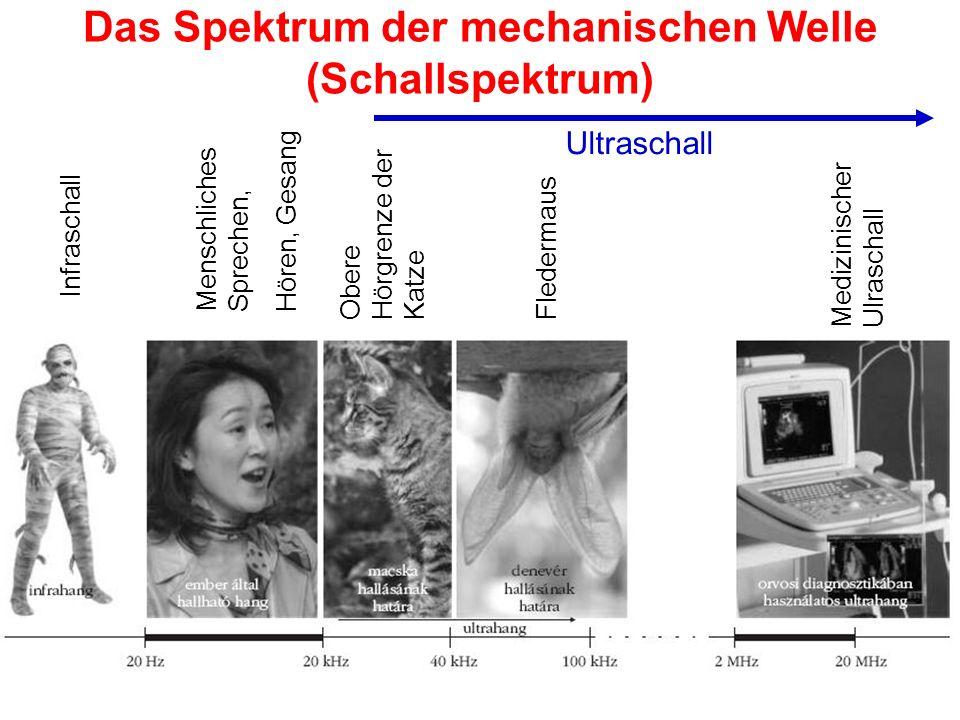 Das Spektrum der mechanischen Welle (Schallspektrum) Infraschall Menschliches Sprechen, Hören, Gesang Obere Hörgrenze der Katze Fledermaus Medizinisch