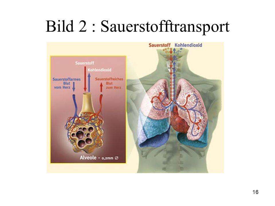 16 Bild 2 : Sauerstofftransport