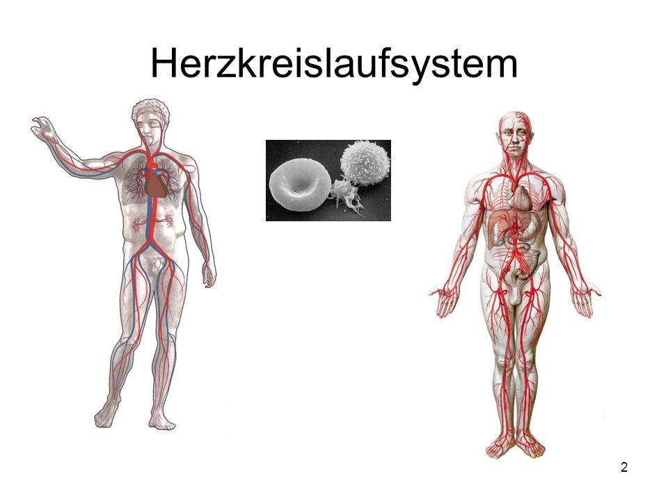 2 Herzkreislaufsystem