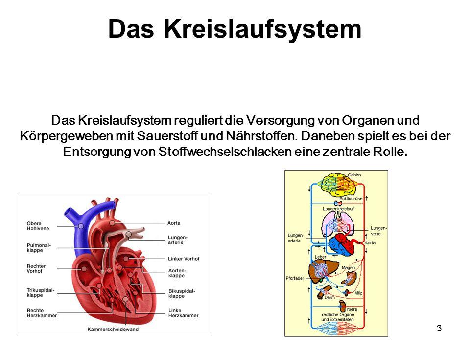 3 Das Kreislaufsystem Das Kreislaufsystem reguliert die Versorgung von Organen und Körpergeweben mit Sauerstoff und Nährstoffen. Daneben spielt es bei