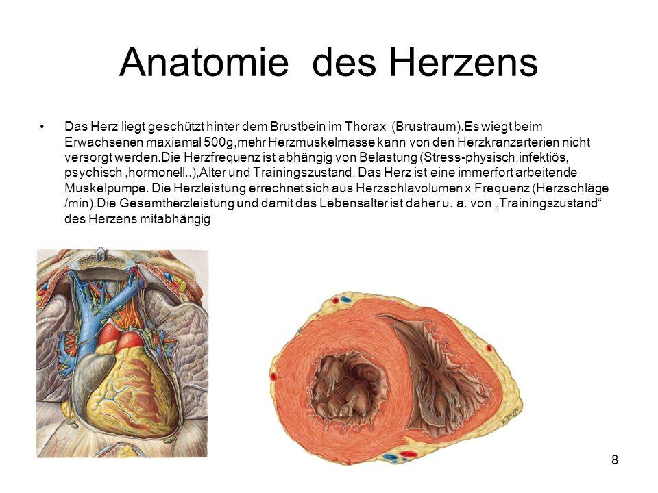 8 Anatomie des Herzens Das Herz liegt geschützt hinter dem Brustbein im Thorax (Brustraum).Es wiegt beim Erwachsenen maxiamal 500g,mehr Herzmuskelmasse kann von den Herzkranzarterien nicht versorgt werden.Die Herzfrequenz ist abhängig von Belastung (Stress-physisch,infektiös, psychisch,hormonell..),Alter und Trainingszustand.