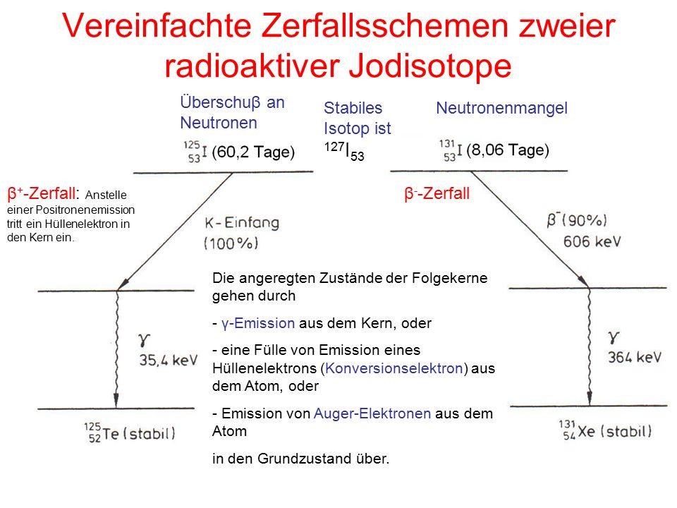 Vereinfachte Zerfallsschemen zweier radioaktiver Jodisotope Stabiles Isotop ist 127 I 53 Überschuβ an Neutronen Neutronenmangel β - -Zerfallβ + -Zerfa
