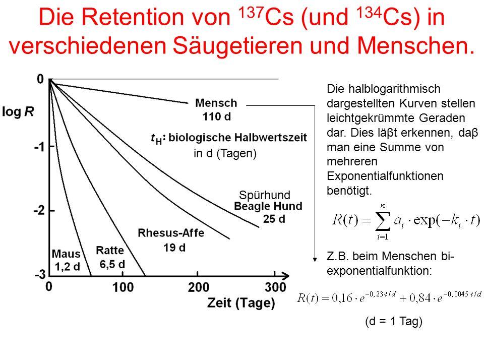 Die Retention von 137 Cs (und 134 Cs) in verschiedenen Säugetieren und Menschen. Die halblogarithmisch dargestellten Kurven stellen leichtgekrümmte Ge