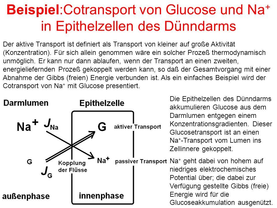 Beispiel:Cotransport von Glucose und Na + in Epithelzellen des Dünndarms Der aktive Transport ist definiert als Transport von kleiner auf große Aktivität (Konzentration).