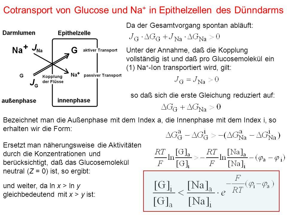 Cotransport von Glucose und Na + in Epithelzellen des Dünndarms Da der Gesamtvorgang spontan abläuft: Unter der Annahme, daß die Kopplung vollständig ist und daß pro Glucosemolekül ein (1) Na + -Ion transportiert wird, gilt: so daß sich die erste Gleichung reduziert auf: Bezeichnet man die Außenphase mit dem Index a, die Innenphase mit dem Index i, so erhalten wir die Form: Ersetzt man näherungsweise die Aktivitäten durch die Konzentrationen und berücksichtigt, daß das Glucosemolekül neutral (Z = 0) ist, so ergibt: und weiter, da ln x > ln y gleichbedeutend mit x > y ist: