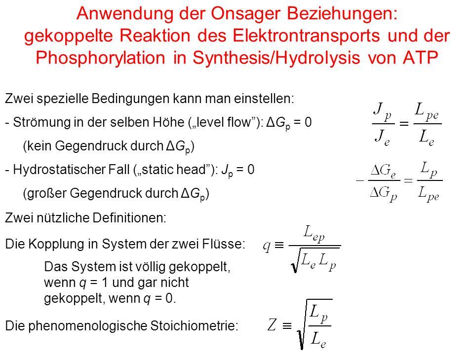 """Anwendung der Onsager Beziehungen: gekoppelte Reaktion des Elektrontransports und der Phosphorylation in Synthesis/Hydrolysis von ATP Zwei spezielle Bedingungen kann man einstellen: - Strömung in der selben Höhe (""""level flow ): ΔG p = 0 (kein Gegendruck durch ΔG p ) - Hydrostatischer Fall (""""static head ): J p = 0 (großer Gegendruck durch ΔG p ) Die Kopplung in System der zwei Flüsse: Das System ist völlig gekoppelt, wenn q = 1 und gar nicht gekoppelt, wenn q = 0."""