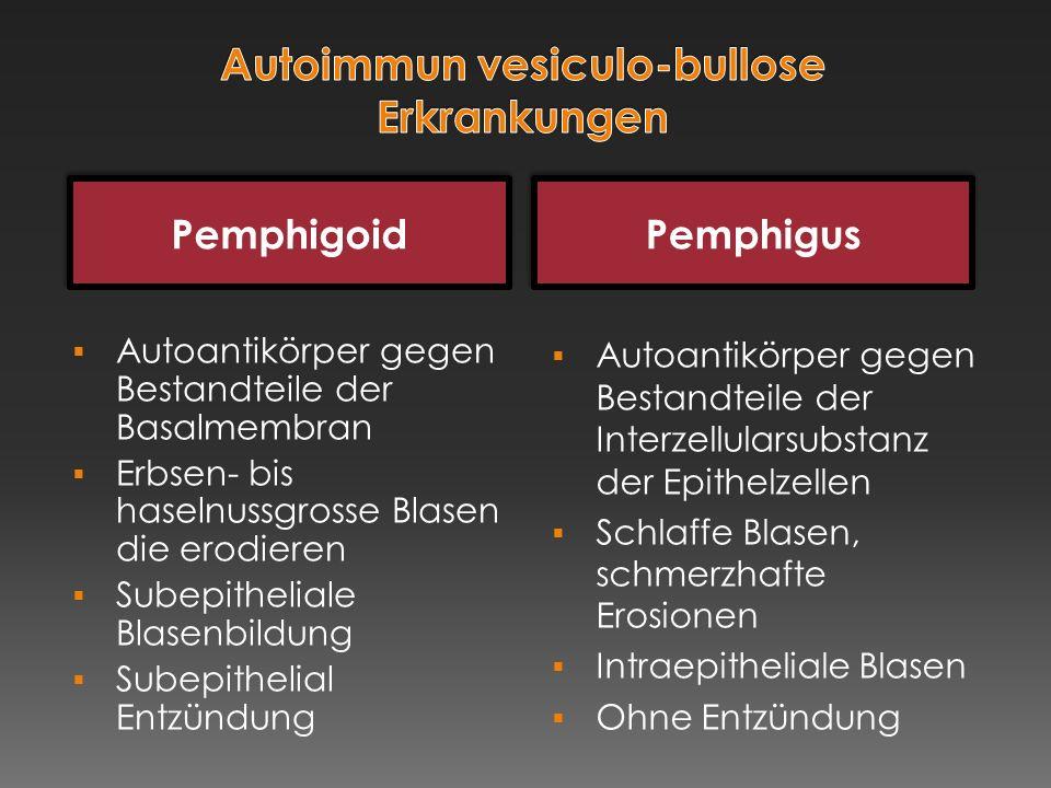 Pemphigoid Pemphigus  Autoantikörper gegen Bestandteile der Basalmembran  Erbsen- bis haselnussgrosse Blasen die erodieren  Subepitheliale Blasenbi