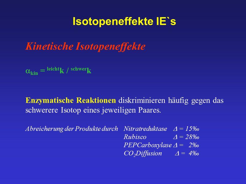 Isotopeneffekte IE`s Kinetische Isotopeneffekte  kin = leicht k / schwer k Enzymatische Reaktionen diskriminieren häufig gegen das schwerere Isotop e