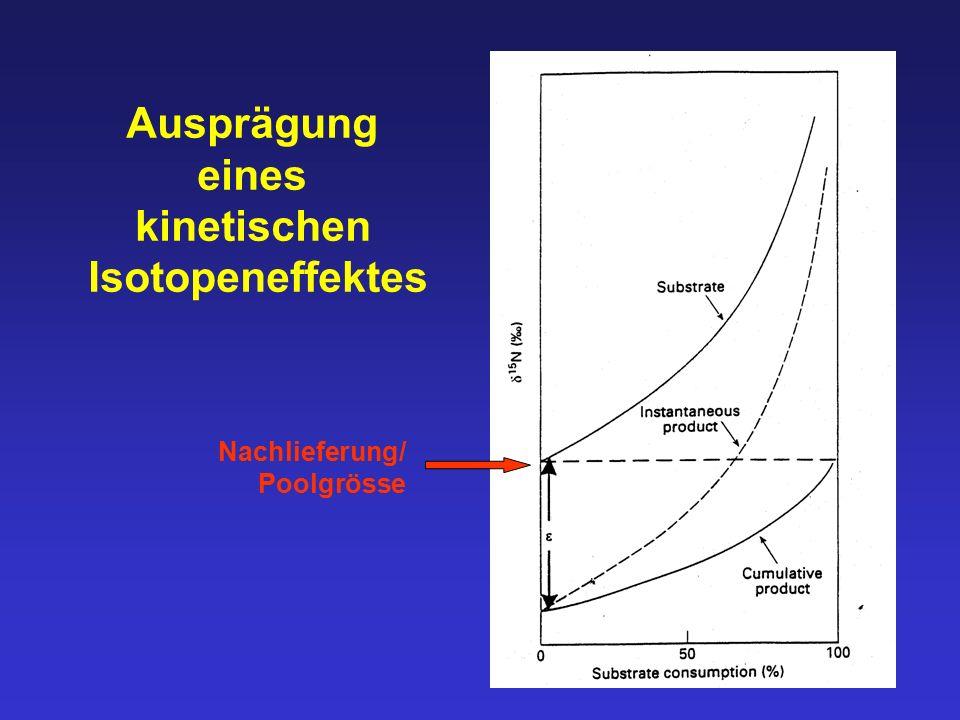 Ausprägung eines kinetischen Isotopeneffektes Nachlieferung/ Poolgrösse