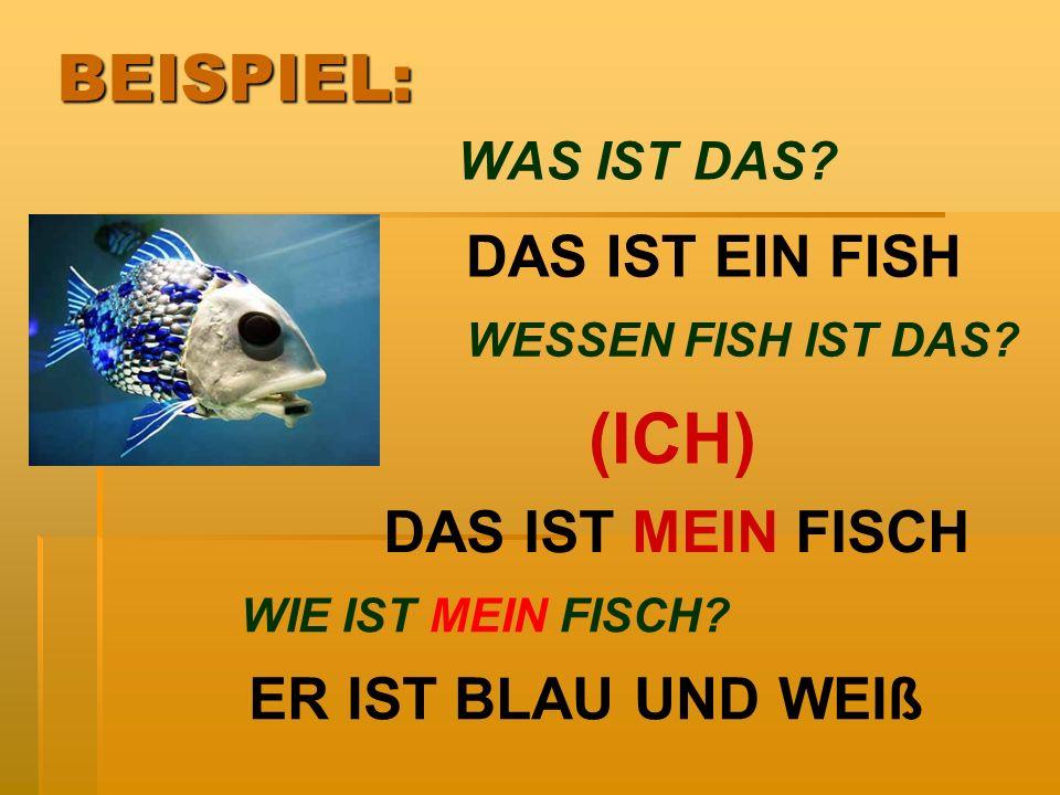 WAS IST DAS? DAS IST EIN FISH DAS IST MEIN FISCH WESSEN FISH IST DAS? (ICH) WIE IST MEIN FISCH? ER IST BLAU UND WEIß BEISPIEL: