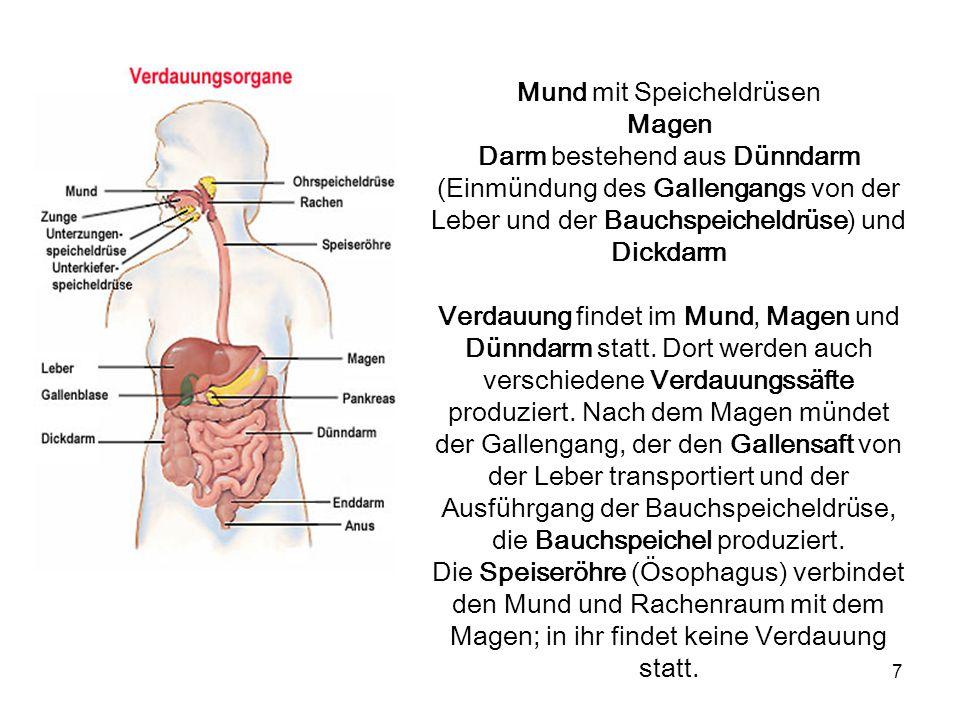 7 Mund mit Speicheldrüsen Magen Darm bestehend aus Dünndarm (Einmündung des Gallengangs von der Leber und der Bauchspeicheldrüse) und Dickdarm Verdauu