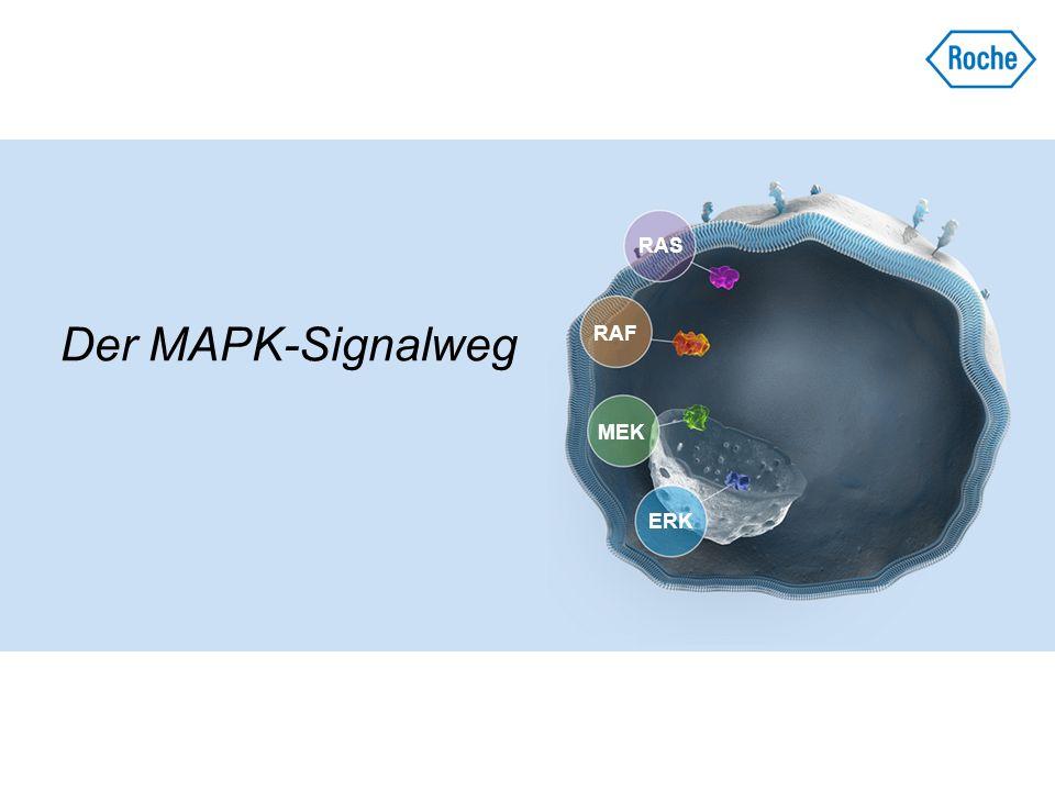 BRAF-Inhibition beim Melanom mit BRAF V600 -Mutation Tumoranalysen bei Patienten mit metastasiertem Melanom, die im Rahmen einer klinischen Phase-I- Studie mit einem BRAF-Inhibitor (BRAFi) behandelt wurden, haben gezeigt, dass Melanome mit BRAF V600 -Mutation sehr stark von der Aktivierung des MAPK-Signalwegs abhängig sind Eine Inhibition von mehr als 80 % der ERK- Phosphorylierung/Kinaseaktivität korrelierte mit einem klinischen Ansprechen 1 In klinischen Phase-III-Studien zeigte eine Behandlung mit einer BRAFi-Monotherapie im Vergleich zu konventioneller Chemotherapie bei zuvor unbehandelten Patienten mit nicht resezierbarem, lokal fortgeschrittenem oder metastasiertem Melanom mit BRAF V600 -Mutation: 2,3 Eine feststellbare Antitumoraktivität 2,3 Einen verbesserten klinischen Nutzen bezüglich RR, PFS 2,3 und OS 2 BRAFi hat nur bei Melanompatienten mit BRAF V600 - Mutation einen klinischen Nutzen 4,5 1.