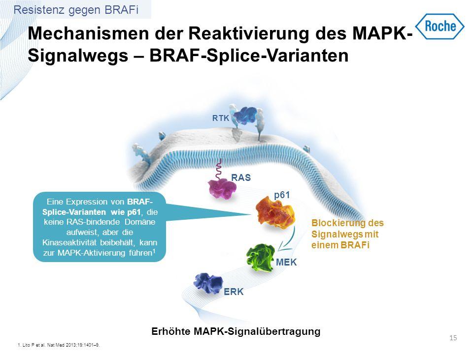 Mechanismen der Reaktivierung des MAPK- Signalwegs – BRAF-Splice-Varianten Eine Expression von BRAF- Splice-Varianten wie p61, die keine RAS-bindende