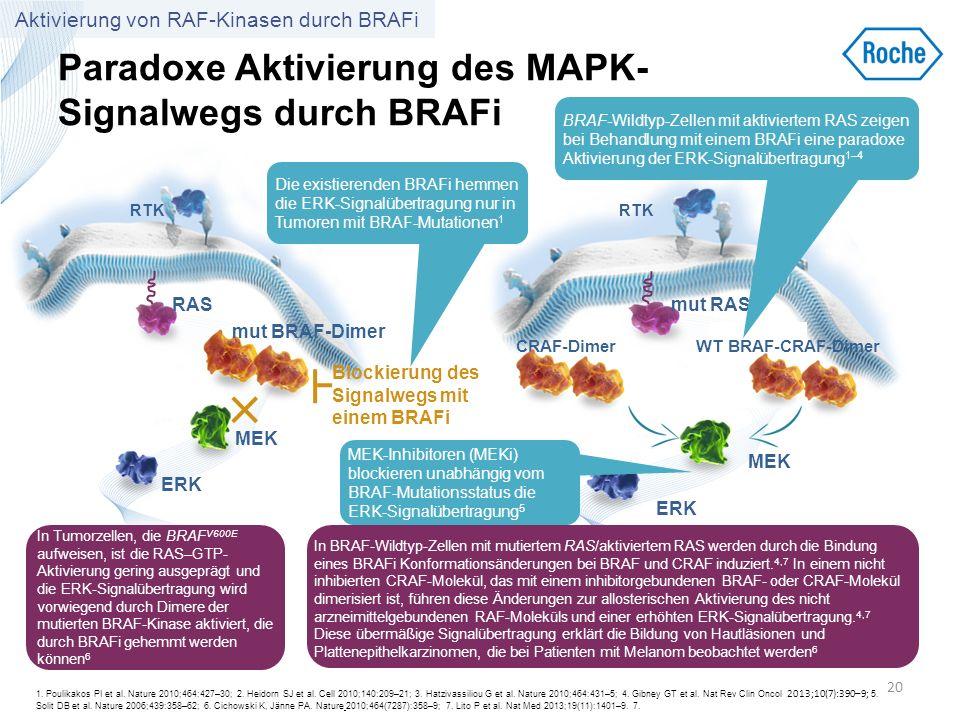 Paradoxe Aktivierung des MAPK- Signalwegs durch BRAFi 20 RTK mut BRAF-Dimer MEK ERK RAS In Tumorzellen, die BRAF V600E aufweisen, ist die RAS–GTP- Akt
