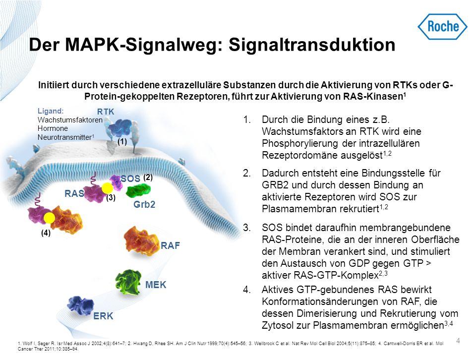 Der MAPK-Signalweg: Signaltransduktion 5.Die RAS-vermittelte Rekrutierung von RAF zur Membran begünstigt Phosphorylierungsänderungen bei RAF, die dessen Serin-/Threoninkinasedomäne aktivieren 2 6.Aktiviertes RAF phosphoryliert und aktiviert MEK1 und MEK2 (dualspezifische Proteinkinasen) 2–9 7.Aktiviertes MEK1 und MEK2 aktivieren ERK1 und ERK2 (Serin-/Threoninkinasen) 2–9 8.ERK1 und ERK2 regulieren Wachstumsfaktor- responsive Zielmoleküle und Transkriptionsfaktoren, 4,7–9 so dass letztlich eine Wachstumsfaktor-abhängige Regulation von Transkription, Metabolismus und zytoskelettalem Rearrangement erfolgen kann 7 RAS aktiviert ein konserviertes dreistufiges Kinase-Signalmodul bestehend aus RAF, MEK und ERK, die durch sequenzielle aktivierende Phosphorylierungsereignisse das Signal übertragen 2,3 5 1.
