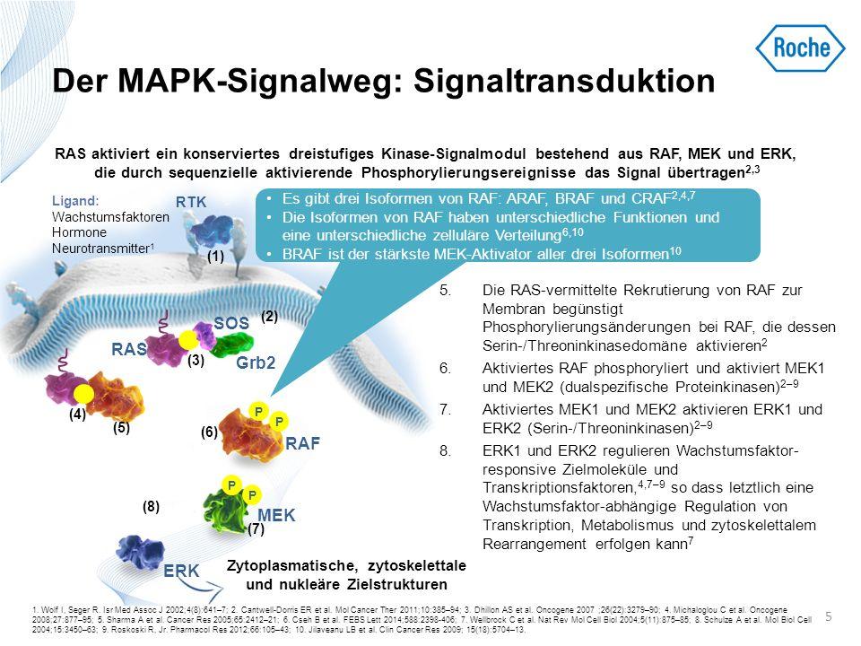 Der MAPK-Signalweg: Signaltransduktion 5.Die RAS-vermittelte Rekrutierung von RAF zur Membran begünstigt Phosphorylierungsänderungen bei RAF, die dess