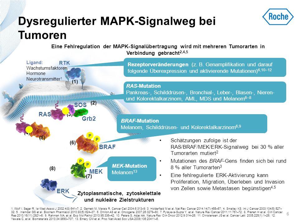 Fehlregulierter MAPK-Signalweg beim Melanom: BRAF-Mutationen BRAF-Mutationen finden sich in ~40–67 % aller Melanome 1–5 ; diese Zahl ist höher als bei anderen Tumorarten 1 Dies könnte mit der Rolle von BRAF in Melanozyten zusammenhängen 1 –Das Vorliegen von BRAF-Mutationen ist mit einer schlechten Prognose assoziiert 6,7 Bei Melanomen mit BRAF-Mutation ist die häufigste Mutation die Substitution eines einzelnen Nukleotids, bei der Valin (V) in Codon 600 durch Glutaminsäure (E) ersetzt wird (V600E).