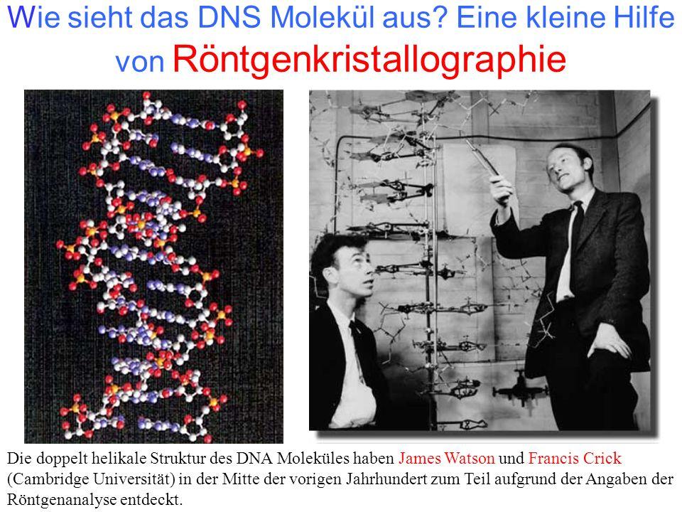 Wie sieht das DNS Molekül aus? Eine kleine Hilfe von Röntgenkristallographie Die doppelt helikale Struktur des DNA Moleküles haben James Watson und Fr