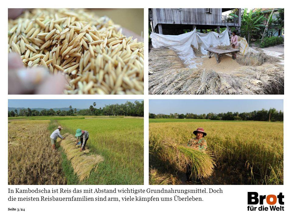 Seite 3/24 In Kambodscha ist Reis das mit Abstand wichtigste Grundnahrungsmittel. Doch die meisten Reisbauernfamilien sind arm, viele kämpfen ums Über