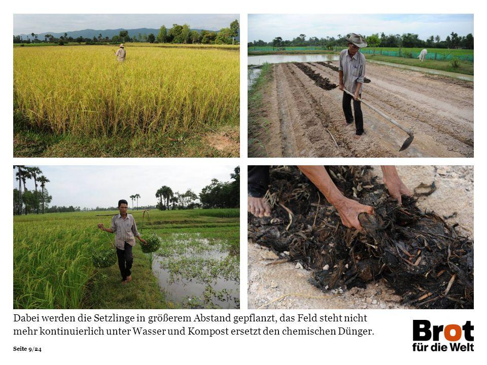 Seite 9/24 Dabei werden die Setzlinge in größerem Abstand gepflanzt, das Feld steht nicht mehr kontinuierlich unter Wasser und Kompost ersetzt den chemischen Dünger.