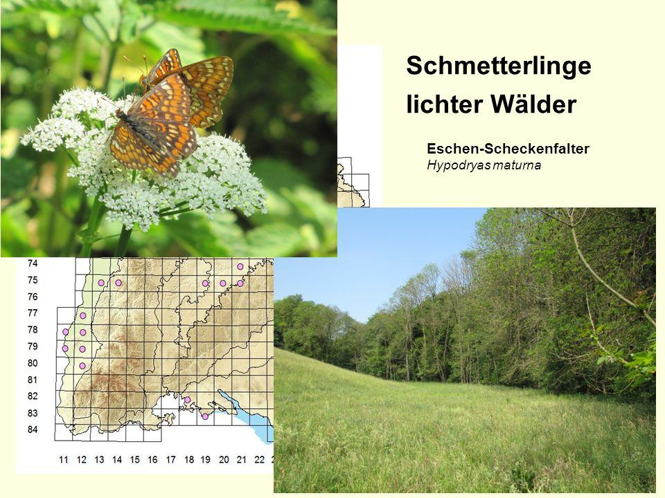 Folie 2, Juli 2015 Schmetterlinge lichter Wälder Wald-Wiesenvögelchen Coenonympha hero Gelbringfalter Lopinga achine