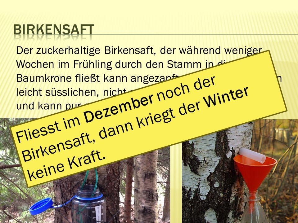 Der zuckerhaltige Birkensaft, der während weniger Wochen im Frühling durch den Stamm in die Baumkrone fließt kann angezapft werden.