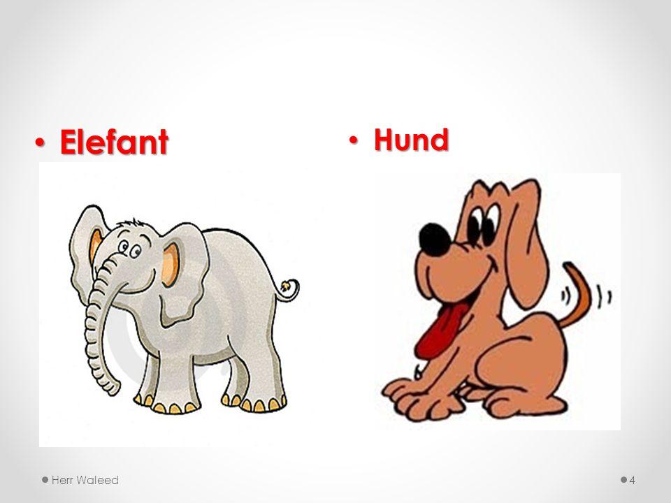 Hund Hund Herr Waleed4 Elefant Elefant