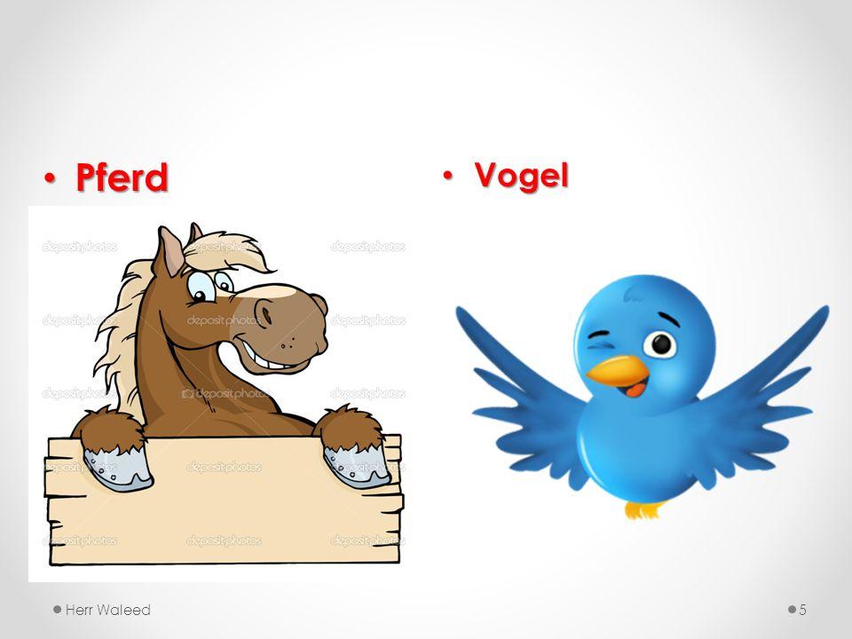 Vogel Vogel Herr Waleed5 Pferd Pferd