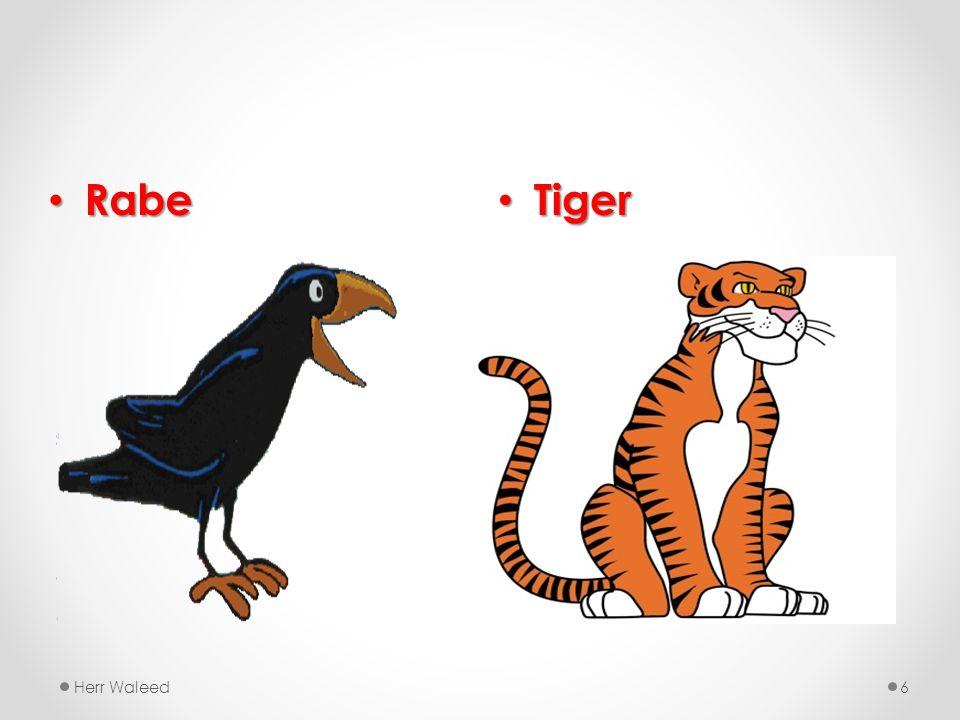 Tiger Tiger Herr Waleed6 Rabe Rabe