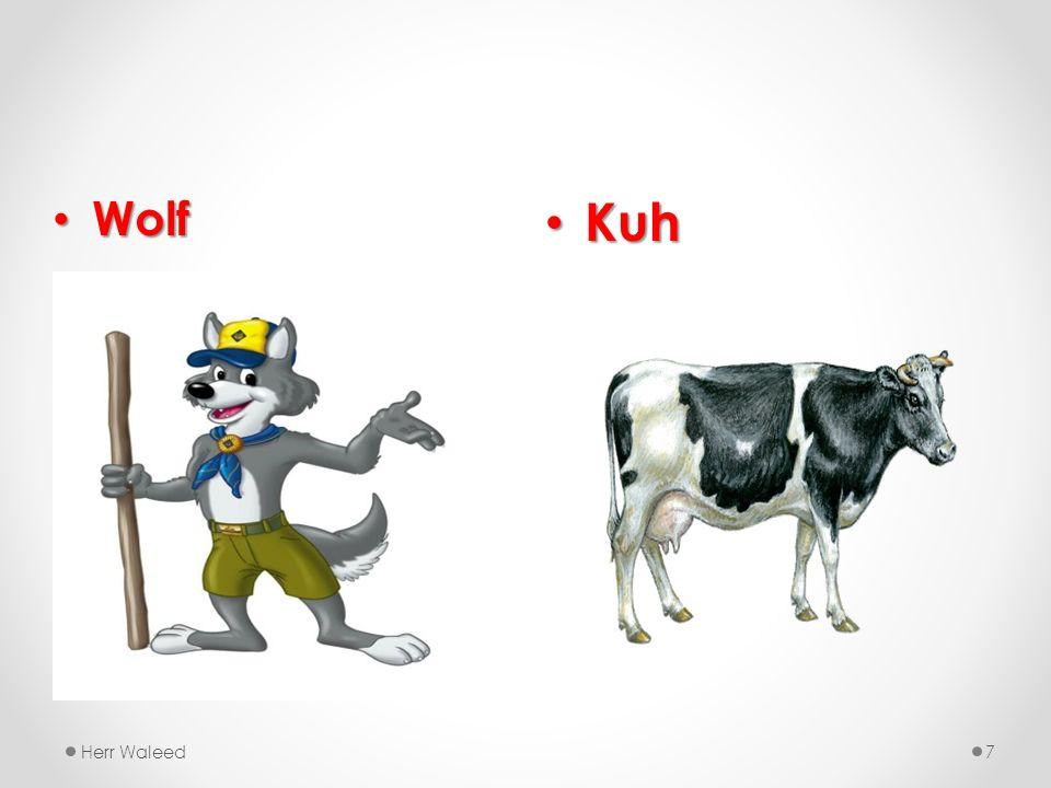 Kuh Kuh Herr Waleed7 Wolf Wolf