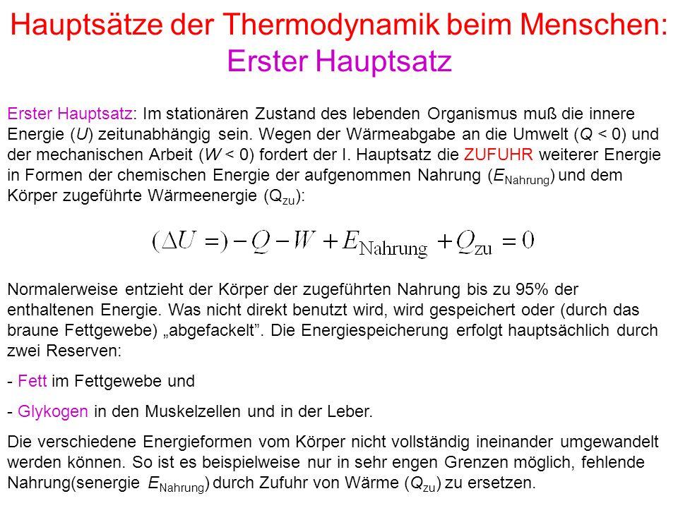 Hauptsätze der Thermodynamik beim Menschen: Erster Hauptsatz Erster Hauptsatz: Im stationären Zustand des lebenden Organismus muß die innere Energie (