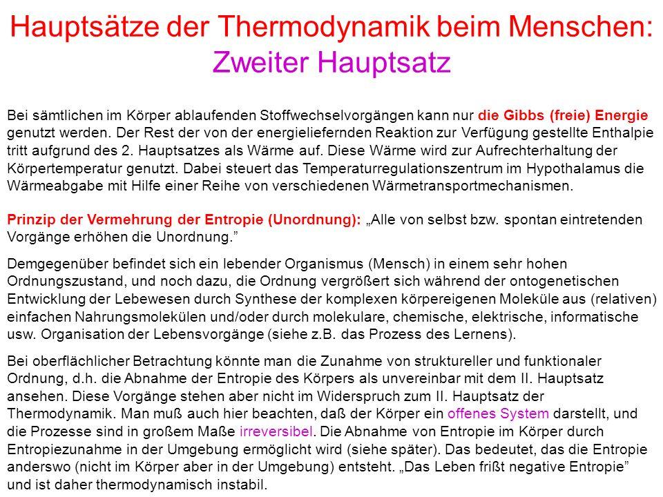 """Hauptsätze der Thermodynamik beim Menschen: Zweiter Hauptsatz Prinzip der Vermehrung der Entropie (Unordnung): """"Alle von selbst bzw. spontan eintreten"""