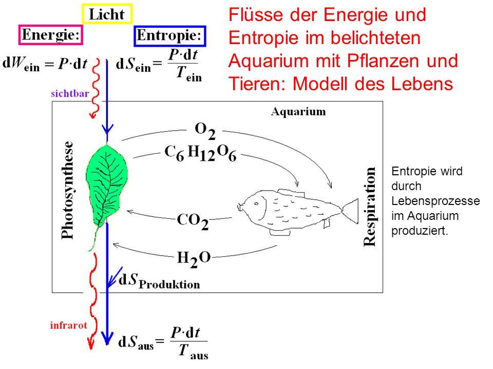 Flüsse der Energie und Entropie im belichteten Aquarium mit Pflanzen und Tieren: Modell des Lebens Entropie wird durch Lebensprozesse im Aquarium prod